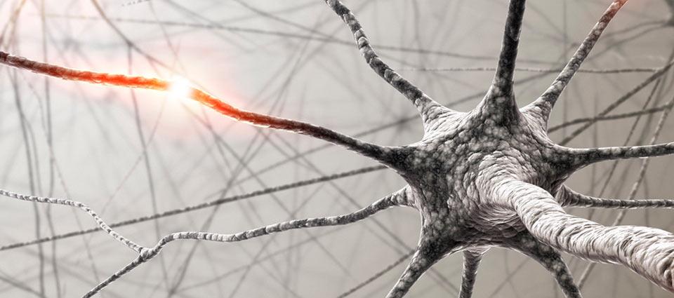 Terapia<strong>Neural</strong>